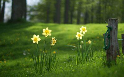 Depuración en primavera