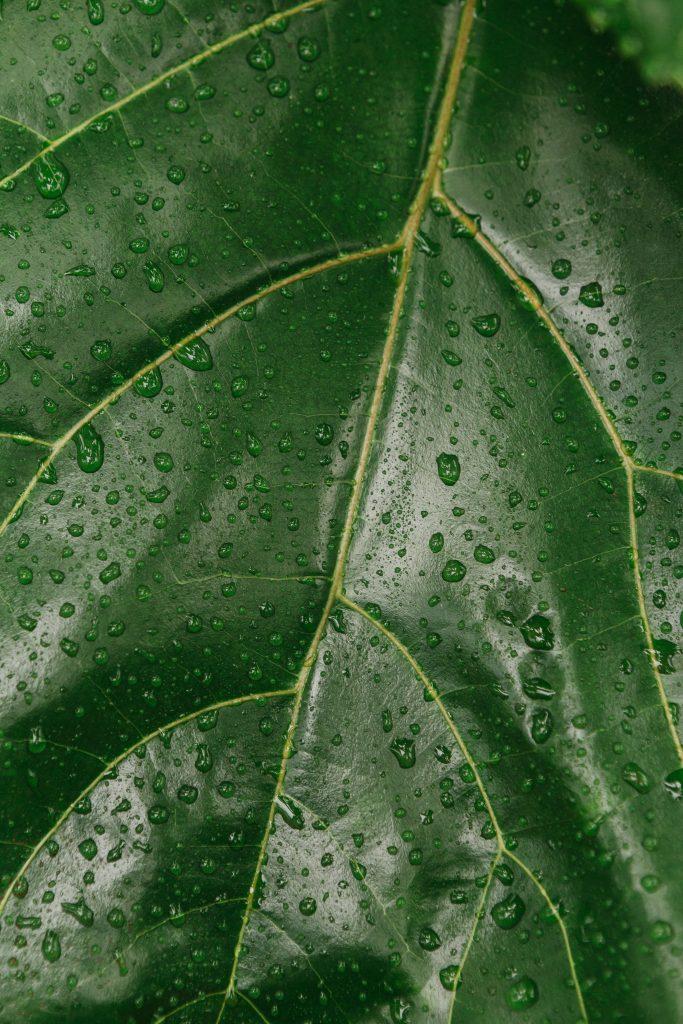 agua-en-las-plantas-estado-gel